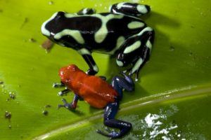 Frog Jumping Church Jump like a frog or learn more about frogs on Frog Jumping Day ©thinkstockphoto.com