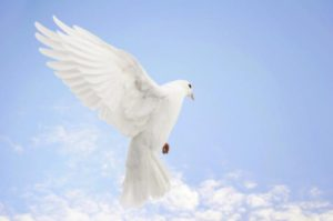 international-day-of-peace- church  The dove is a symbol often associated with the International Day of Peace. ©iStockphoto.com/Sue McDonald